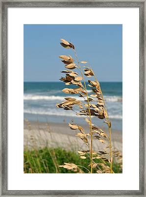 Ocean Breeze Framed Print by Kelly Nowak