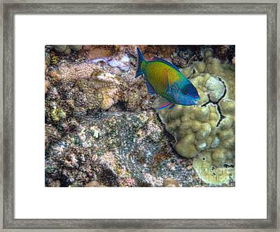 Framed Print featuring the photograph Ocean Color by Peggy Hughes