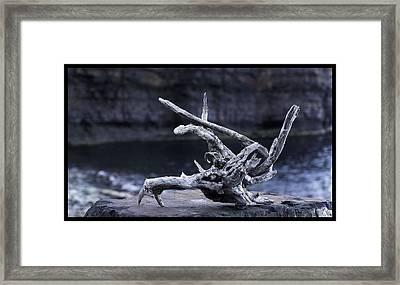 Ocean Driftwood  Framed Print