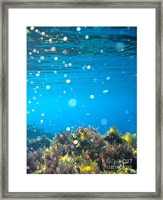 Ocean Garden Framed Print by Stelios Kleanthous