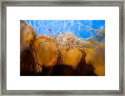Ocean Tendrils Framed Print by Margaret Pitcher