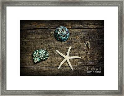 Ocean Treasures Framed Print by Paul Ward