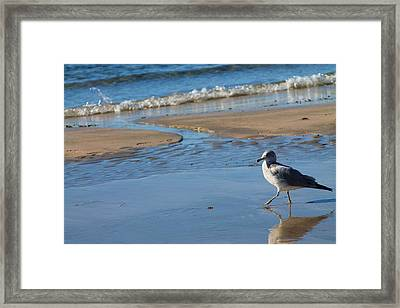 Framed Print featuring the photograph Ocean Walk by Alicia Knust