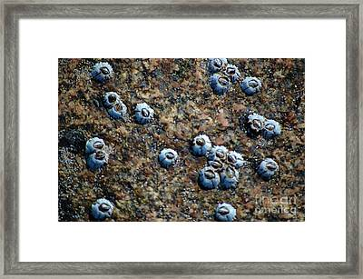 Framed Print featuring the photograph Ocean's Quilt by Christiane Hellner-OBrien