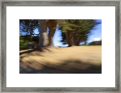 Oceanside Trees Framed Print