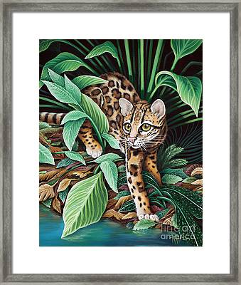 Ocelot Framed Print by Tish Wynne
