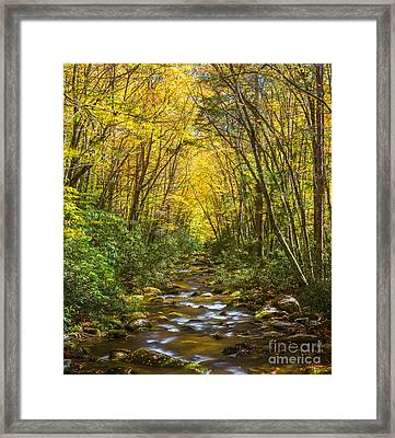Oconaluftee Splendor Framed Print by Carl Amoth