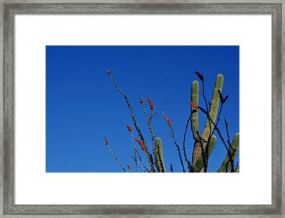 Framed Print featuring the photograph Ocotillo And Saguaro by Diane Lent