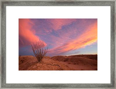 Ocotillo Skies Framed Print by Peter Tellone