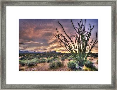 Ocotillo Sunset Framed Print