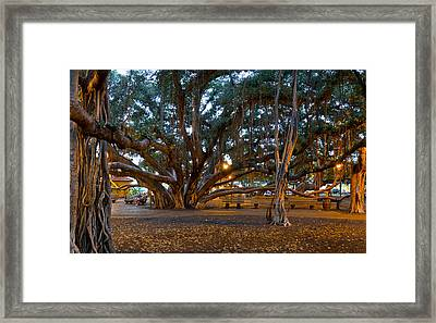 Octobanyan Framed Print