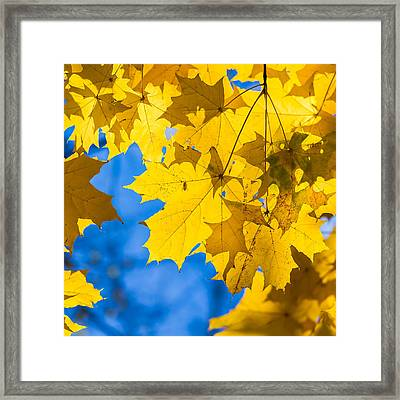 October Blues 8 - Square Framed Print