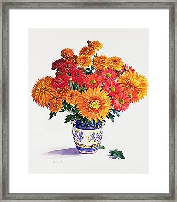 October Chrysanthemums Framed Print by Christopher Ryland