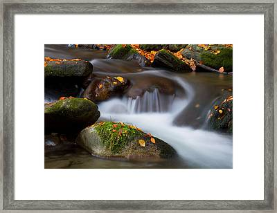 October Detail Framed Print by Mircea Costina Photography