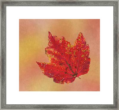 October Glory Framed Print