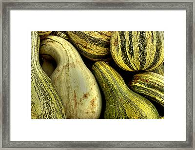 October Gourds Framed Print by Michael Eingle