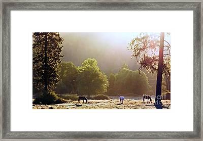October Graze Framed Print
