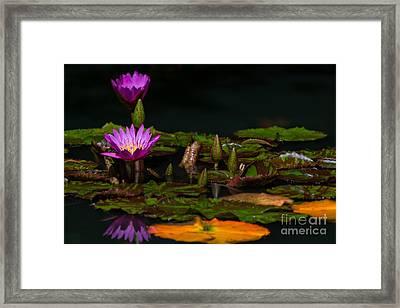 October Lilies 2 Framed Print