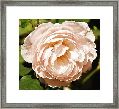 Framed Print featuring the photograph October Rose by Al Fritz