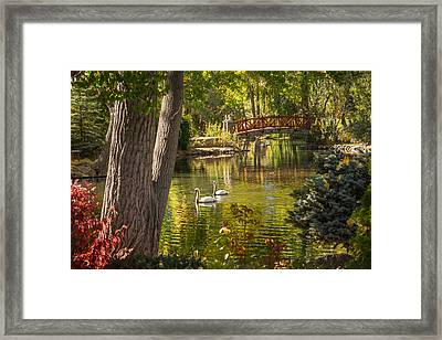 October Swans Framed Print by Janis Knight