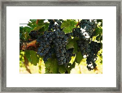 October Vintage Bonair Winery  Framed Print by Jeff Swan