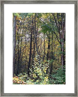 October Woods Framed Print by Melissa Stoudt