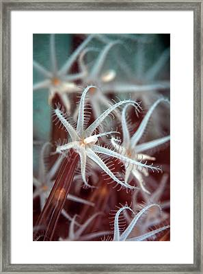 Octocoral Framed Print