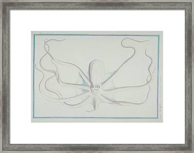 Octopus Sp Framed Print