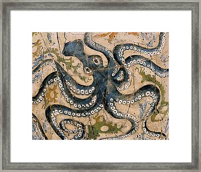 Octopus - Study No. 2 Framed Print by Steve Bogdanoff