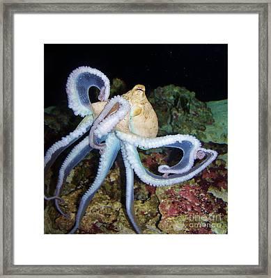 Octopus Waikiki Framed Print
