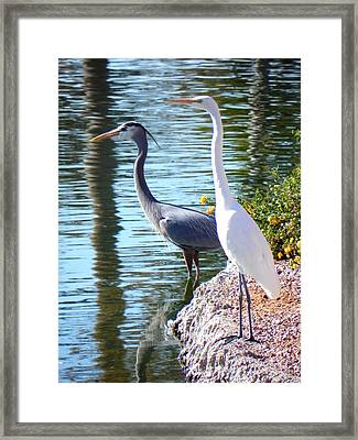 Framed Print featuring the photograph Odd Couple by Deb Halloran