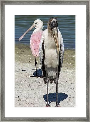 Odd Couple Framed Print by Gerald Eisen