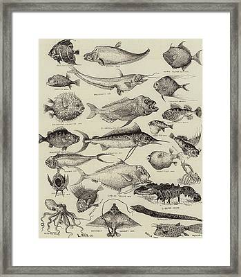 Odd Fish At The International Fisheries Exhibition Framed Print
