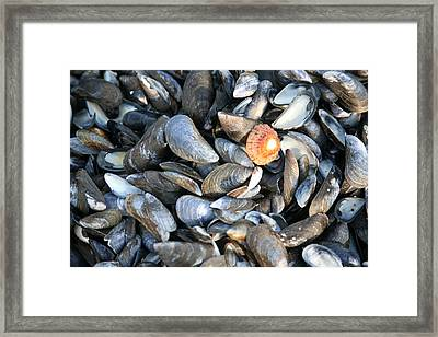Framed Print featuring the photograph Odd Man Out by Christopher Rowlands