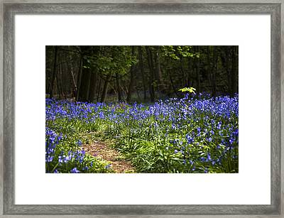 Odd One Out Framed Print by Svetlana Sewell