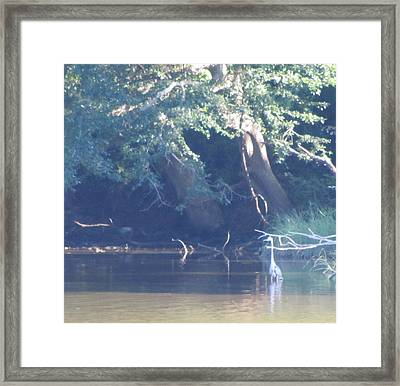 Ode The Great Blue Heron Framed Print by Debbie Nester