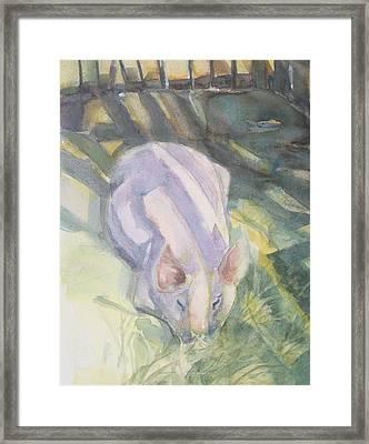 Ode To A Pig Framed Print
