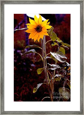 Ode To Sunflowers Framed Print by Patricia Keller