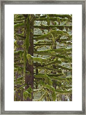 Of Moss And Snow Framed Print by Tim Grams