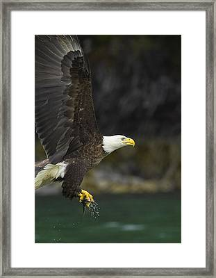 Off With A Meal Framed Print by Tim Grams