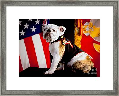 Official Mascot Of The Marine Corps Framed Print