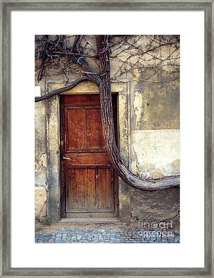 Oh Bended Tree Framed Print by Rebecca Pickrel