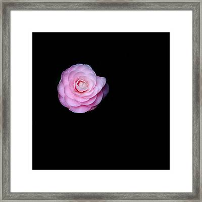 Oh Camellia Framed Print by Rebecca Cozart