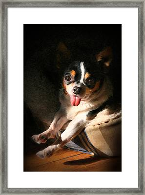 Oh Chihuahua Framed Print by Posey Clements