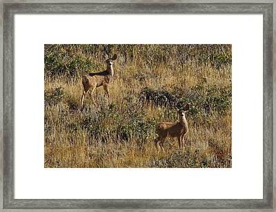 Framed Print featuring the photograph Oh Deer by Charles Warren