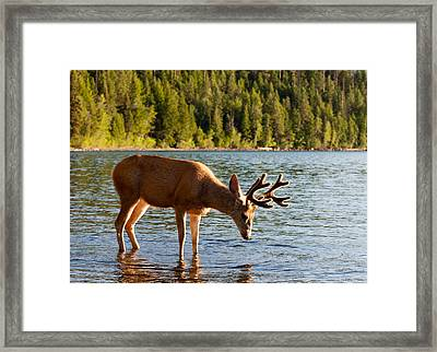 Oh Deer Is That Me Framed Print by Bruce Gourley