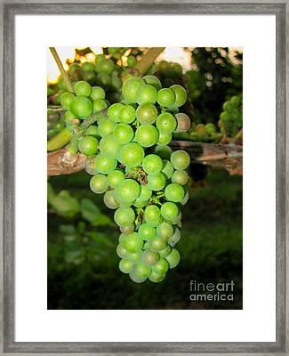 Oh Grape Framed Print