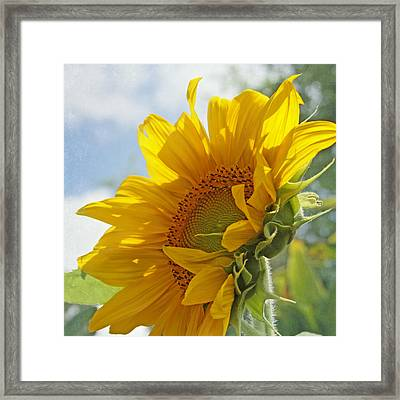 Oh Happy Day Framed Print by Kim Hojnacki