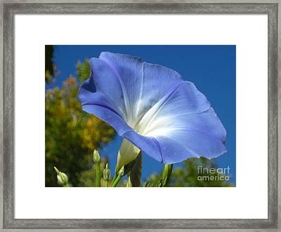 Oh Heavenly Blue 2 Framed Print