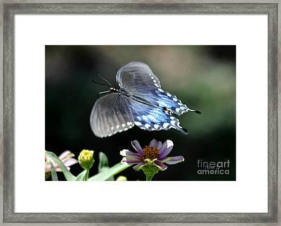 Oh Heavenly Garden Framed Print by Nava Thompson